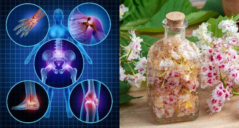 квіти кінського каштана лікування
