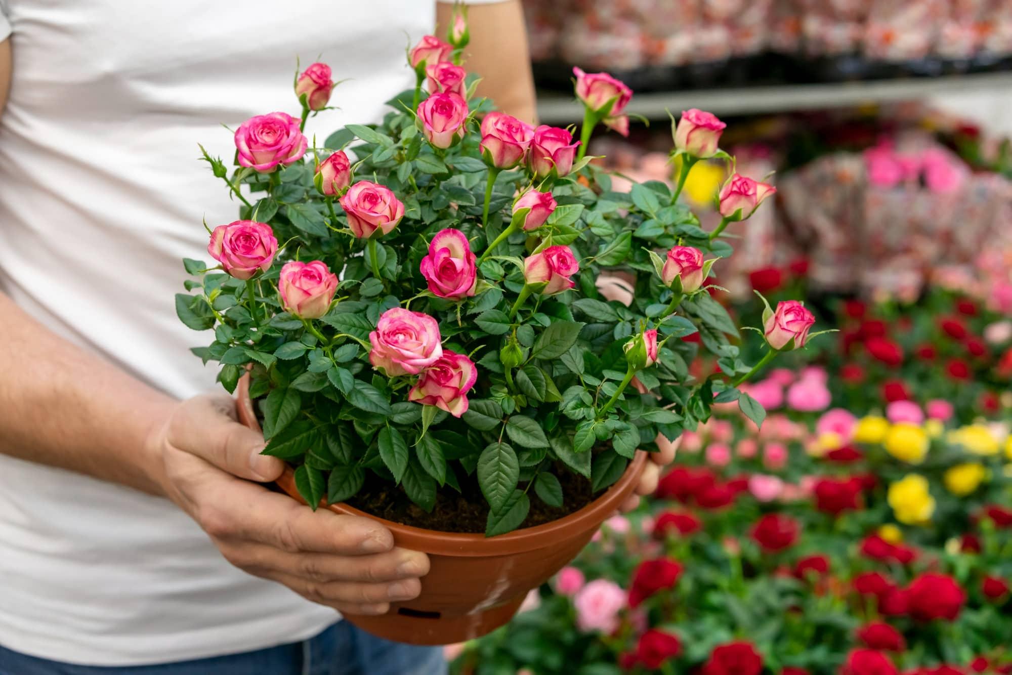 Цветочница выносит летом комнатные растения на улицу, шикуют там до сентября Советы,Балконы,Дом,Растения,Сад,Садоводство,Цветоводство,Цветы