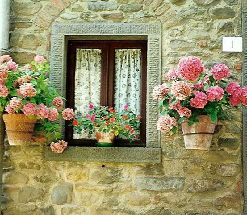цветы для выращивания на подоконнике
