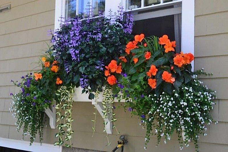 цветы на подоконнике с улицы