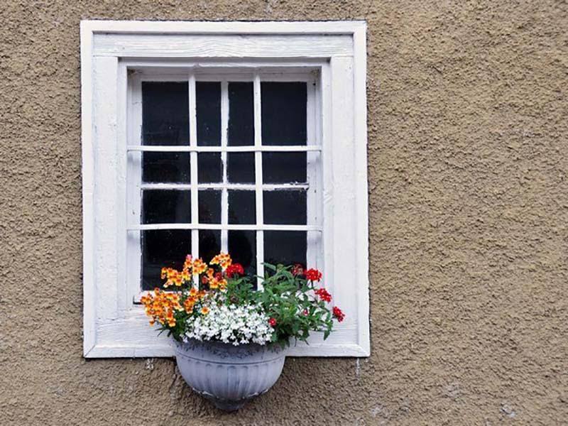 контейнерное озеленение за окном