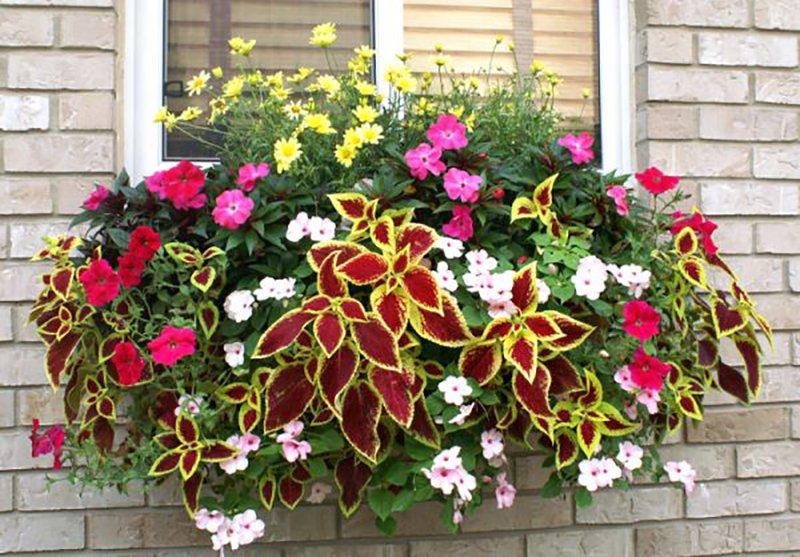 цветы на подоконнике снаружи