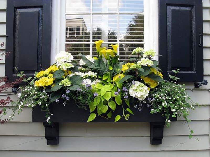 вырастить цветы на подоконнике