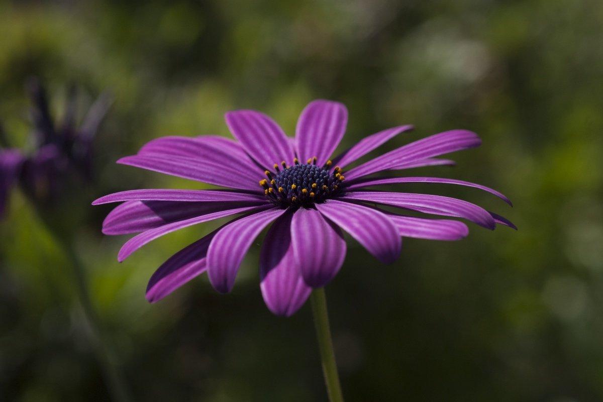 Что сеет в марте ленивая дачница, чтобы цветы всё лето пахли на весь дом