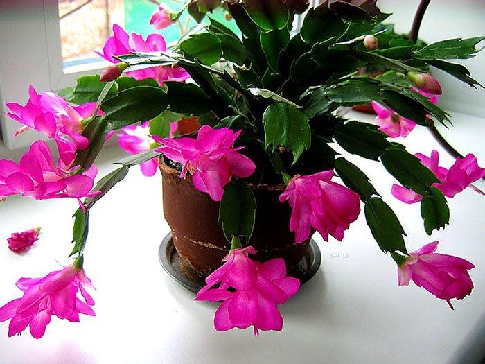 цветы для знака зодиака близнецы
