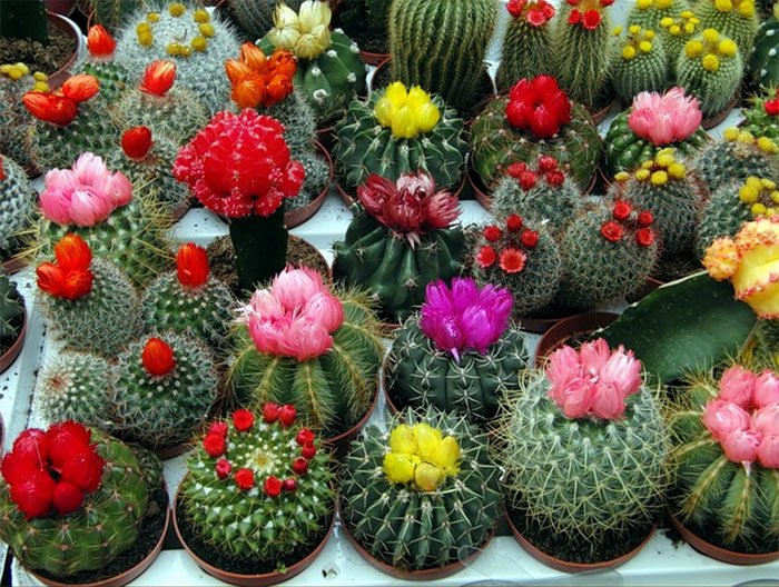 цветок по знаку зодиака весы
