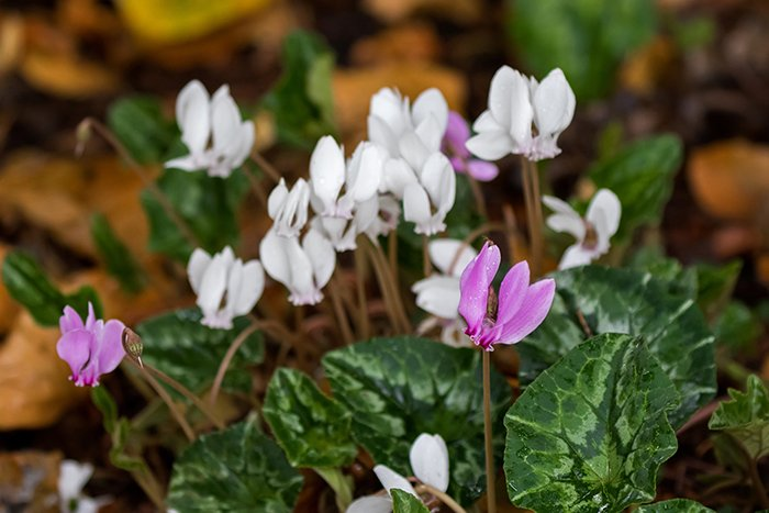 Цветы которые подходят к знаку телец