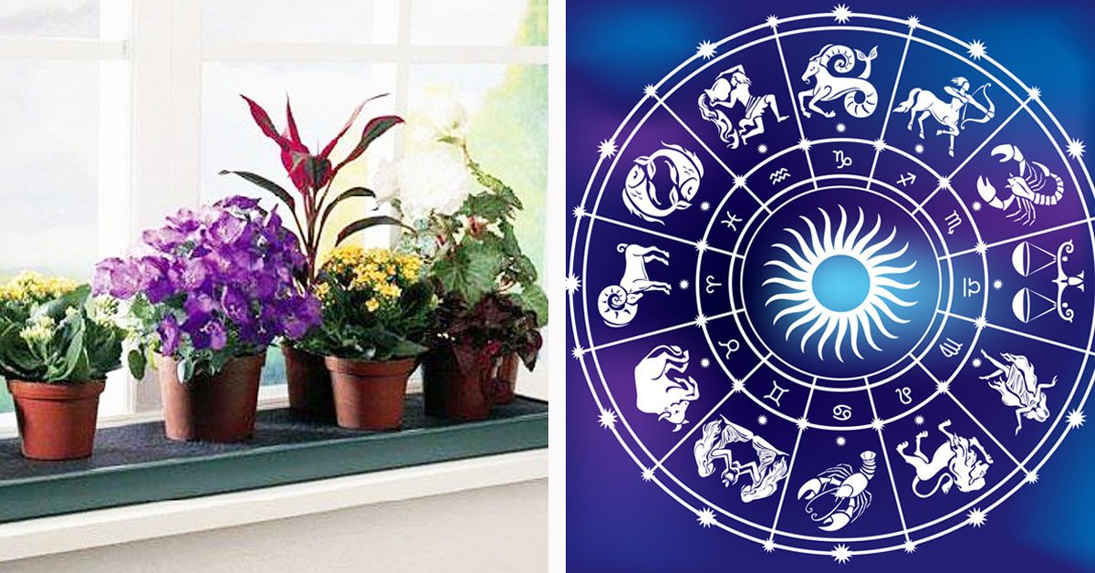 Знаки зодиака растения талисманы