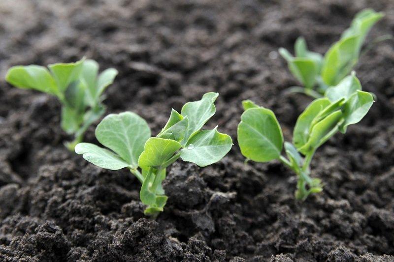 советы и секреты огородникам