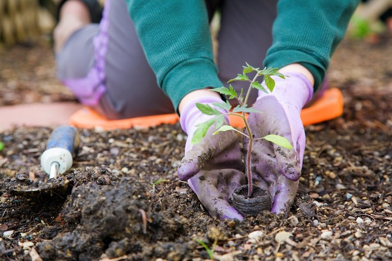 советы дачникам и огородникам