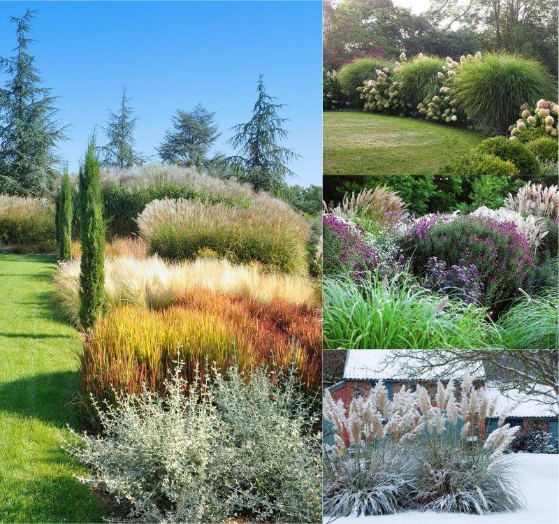 декоративные многолетние травы для сада