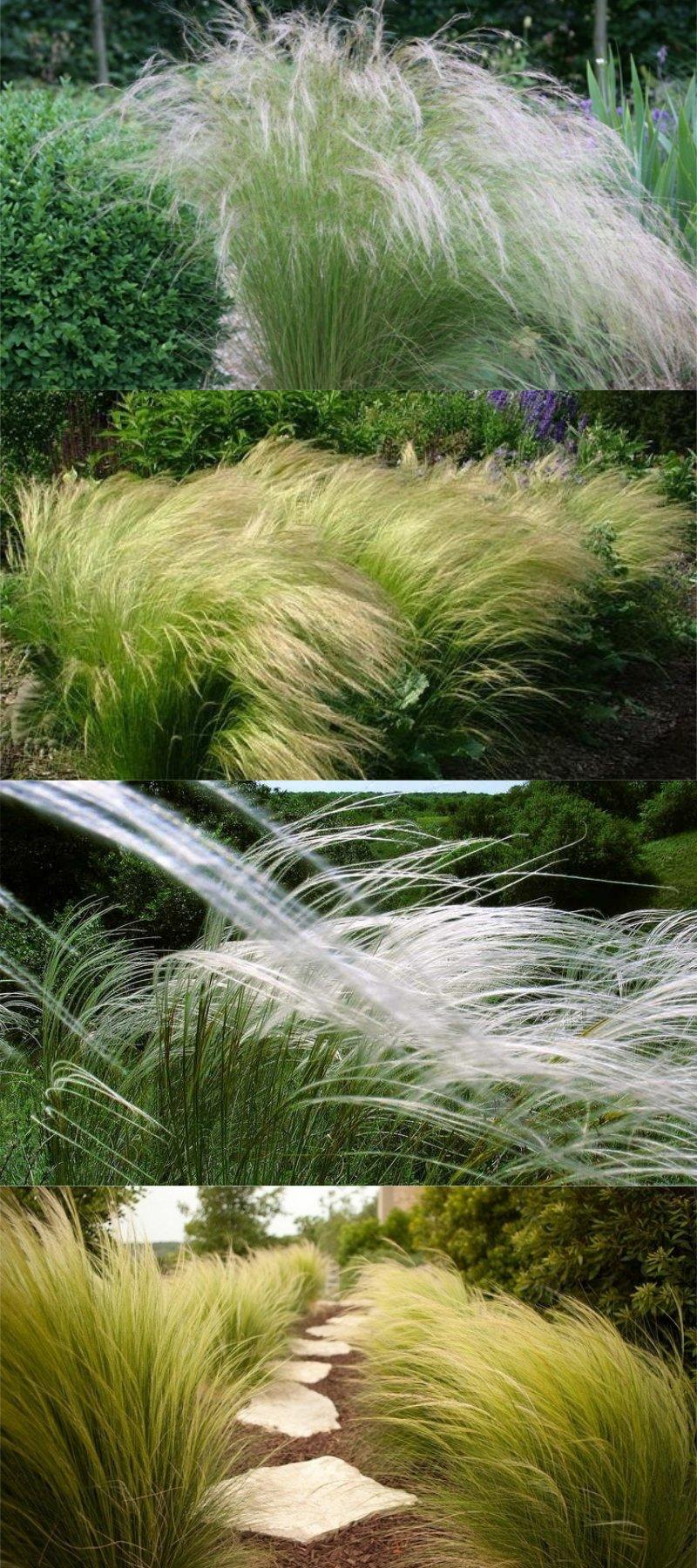 декоративная зеленая трава