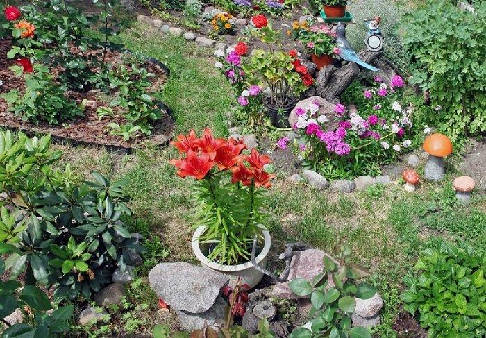 декоративный сад фото