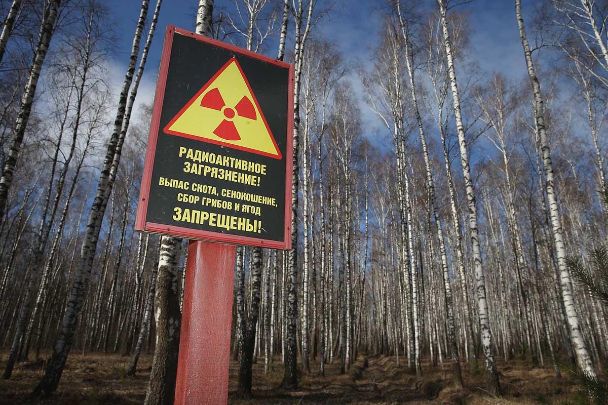 знак в лесу