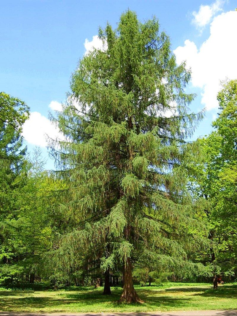 какие деревья выращивать возле дома