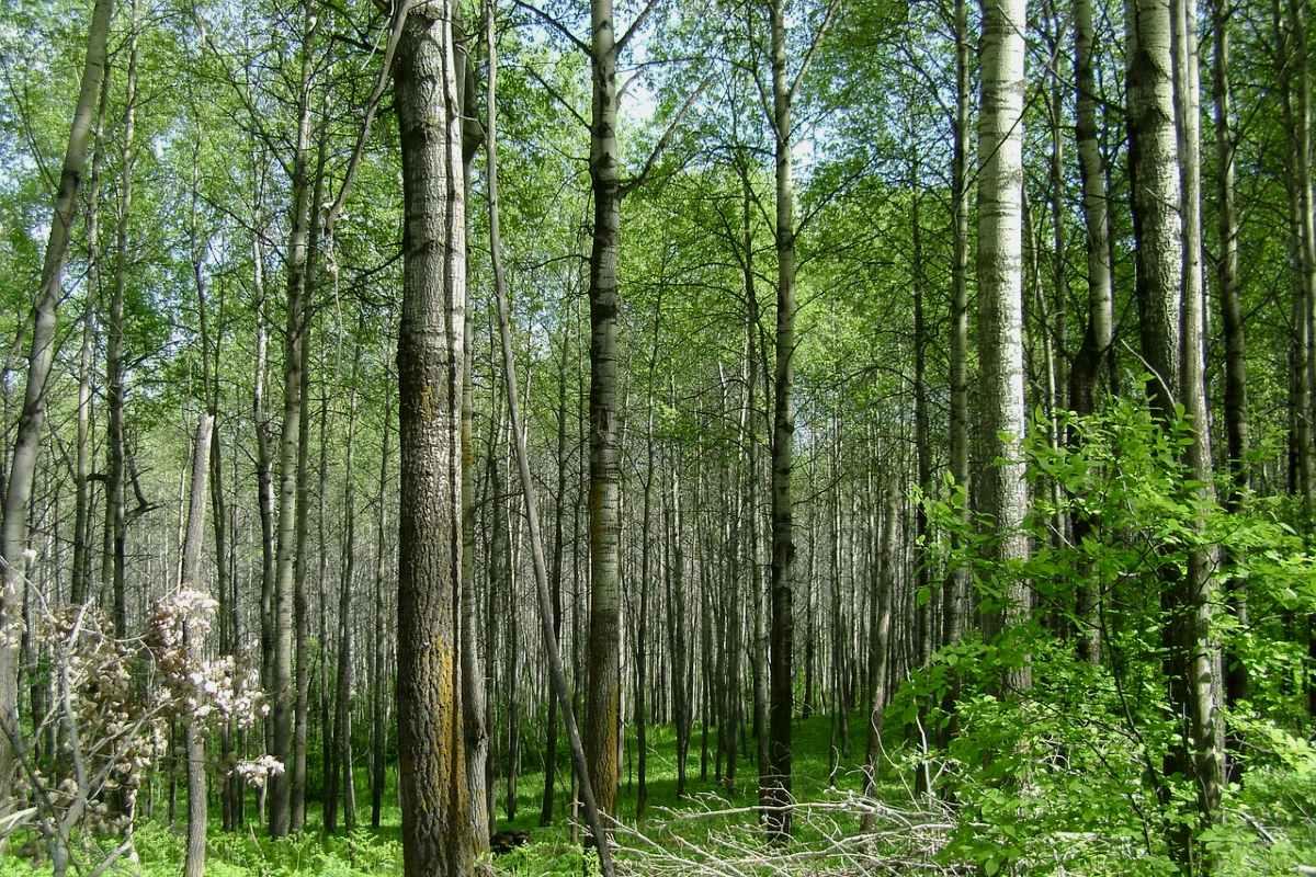 деревья вампиры список