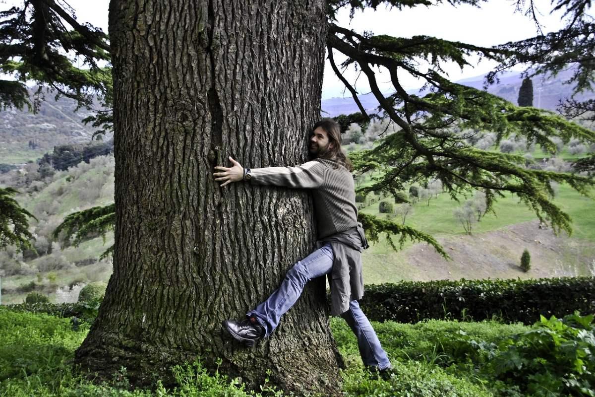 деревья которые лечат