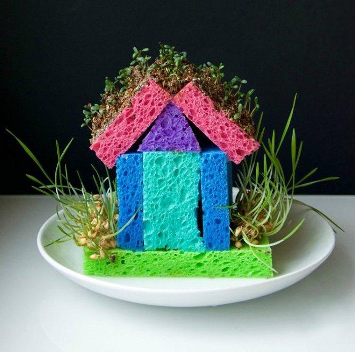как проращивать семена в губке