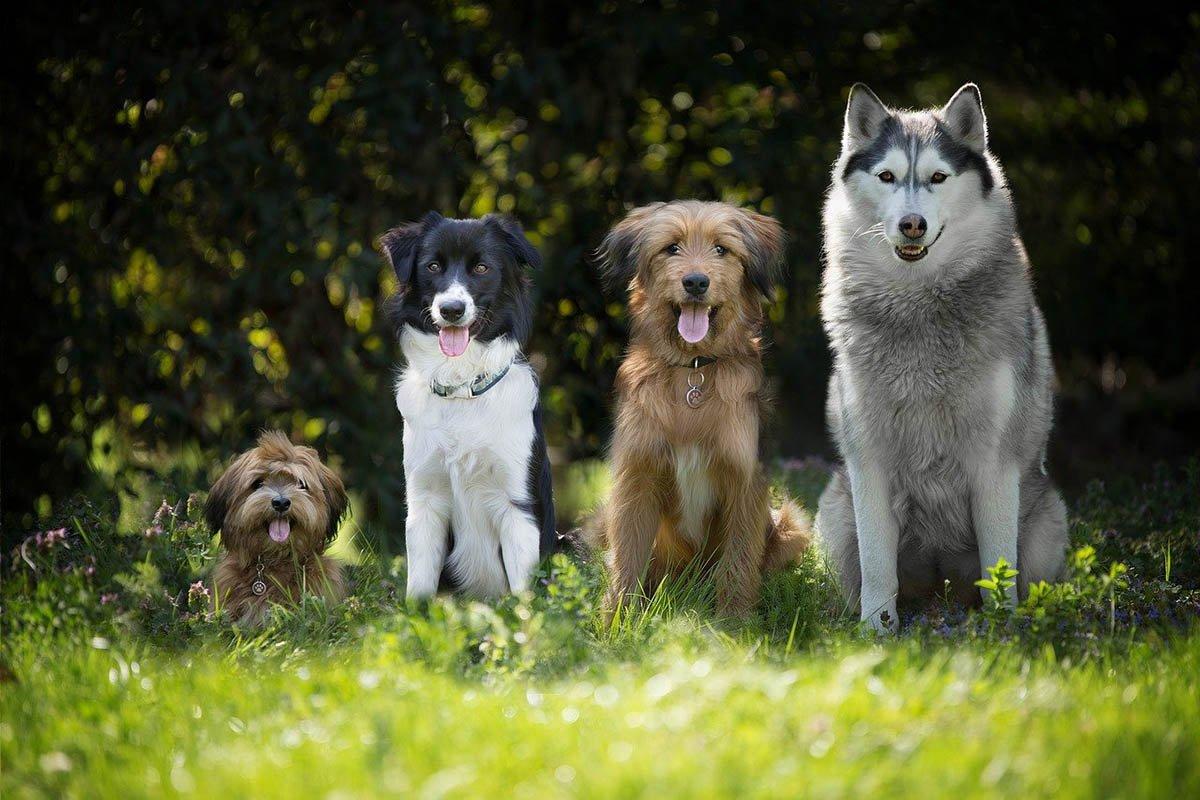 Самые любвеобильные и добрые породы собак для дома