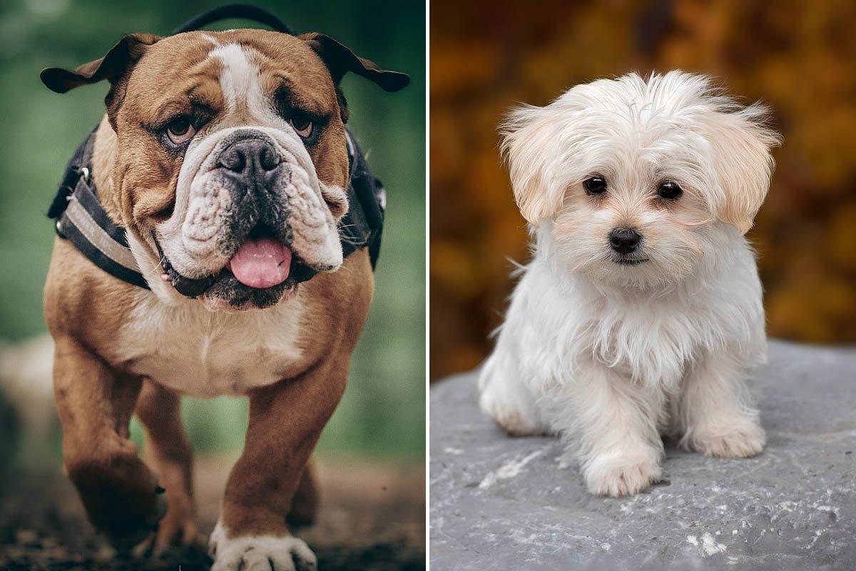 Самые любвеобильные и добрые породы собак для дома Советы,Воспитание,Доброта,Животные,Питомцы,Порода,Преданность,Собаки,Уход