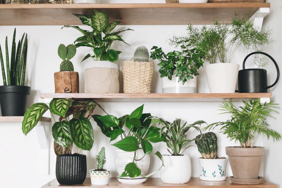 Домашнее растение с листьями, которые могут навредить