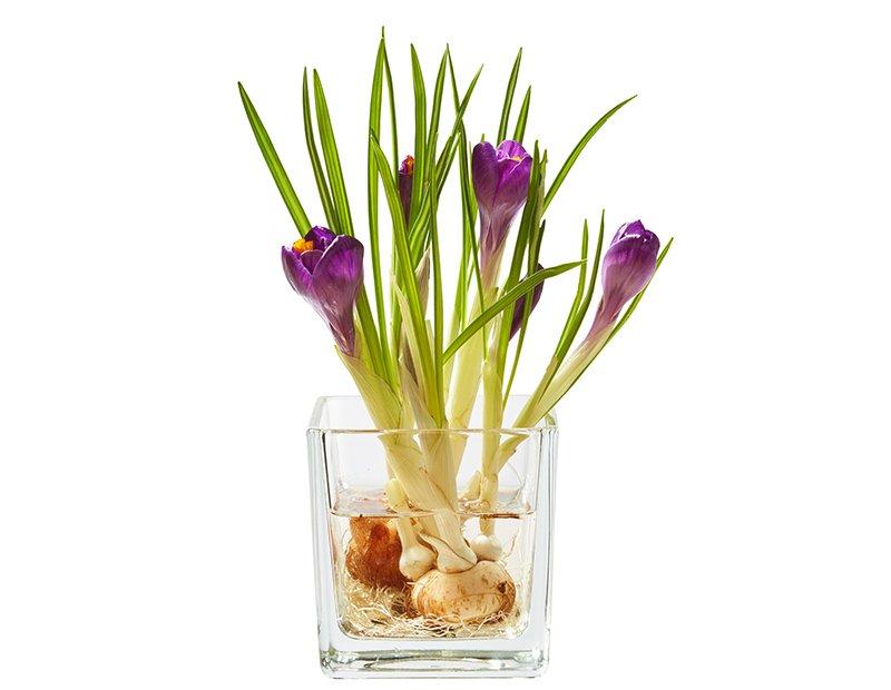 Какие цветы можно вырастить в стакане с водой