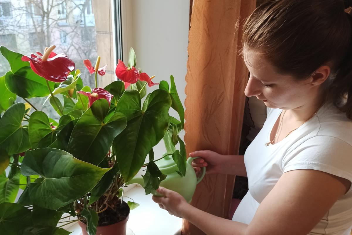 Соседка нашептала советы, из-за которых пропал любимый антуриум, цветок «мужского счастья»