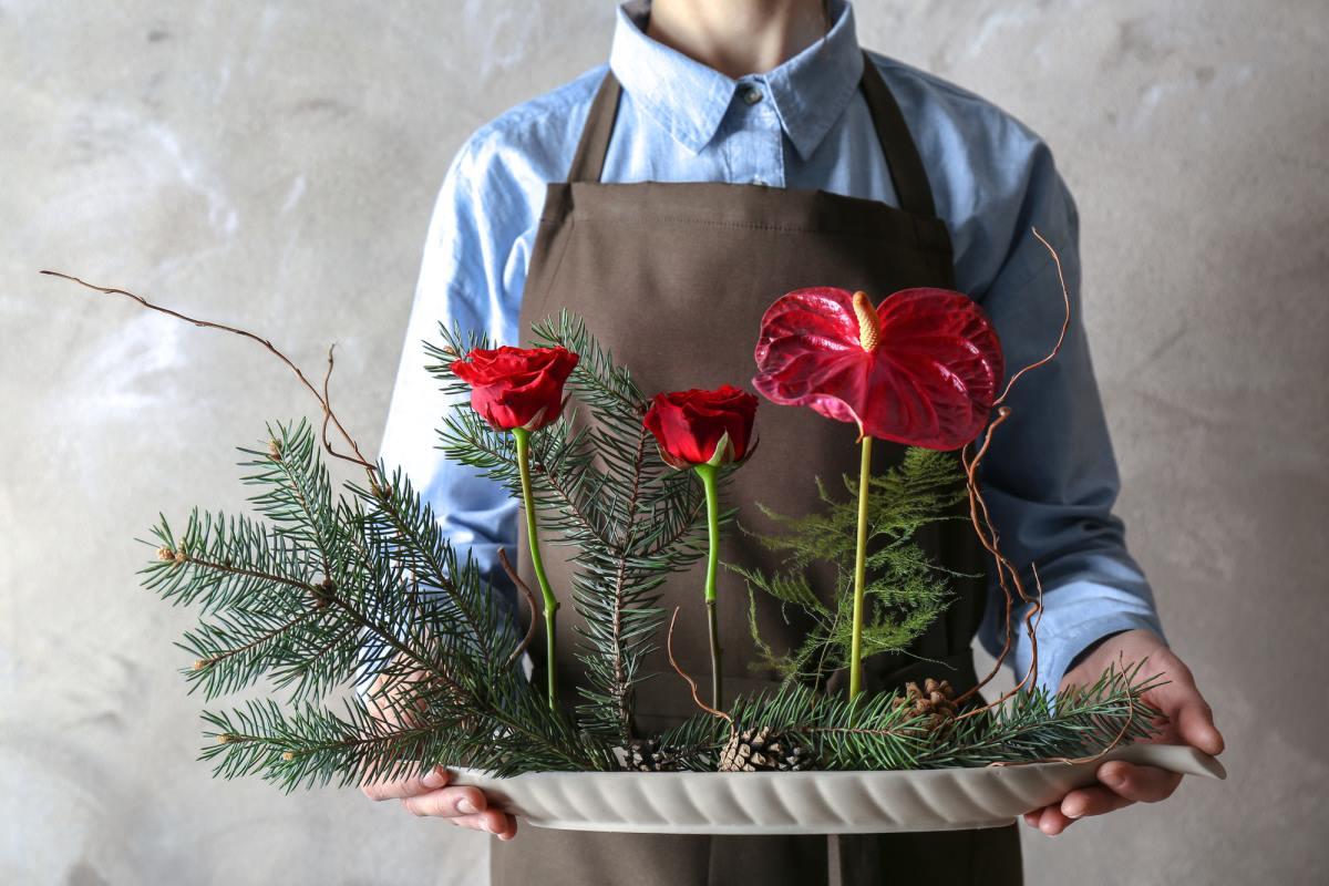 Домашний цветок «мужское счастье»: особенности ухода