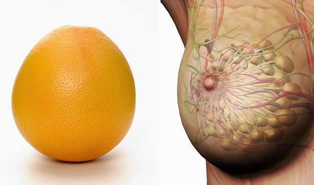грейпфрут для груди