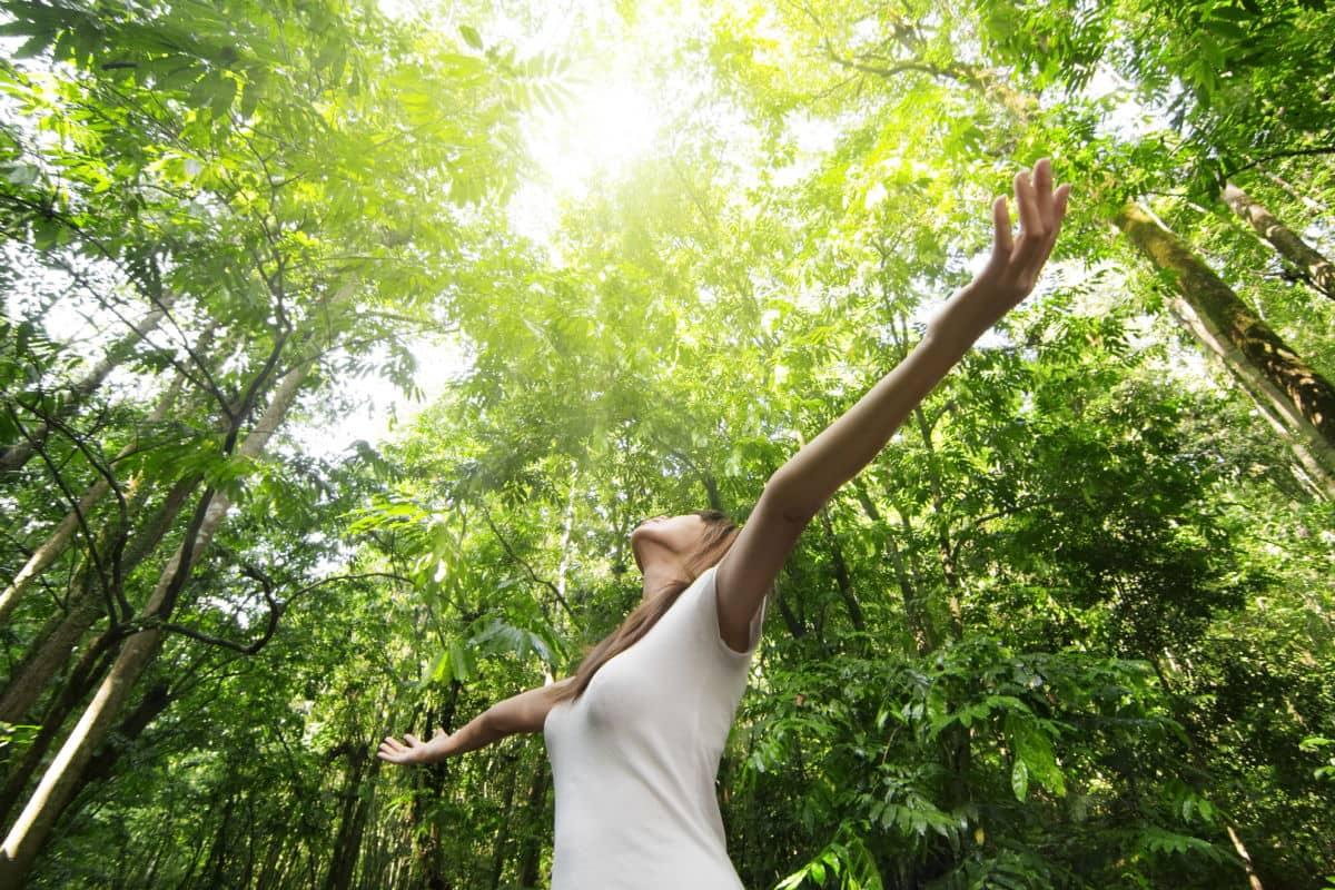 У каких деревьев-спонсоров можно напитаться энергией