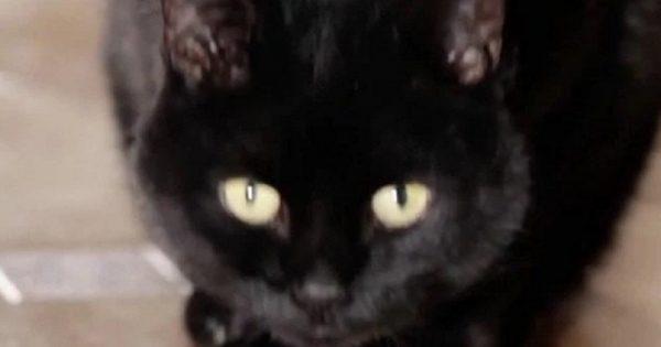Ты всё еще пускаешь кота к себе в кровать? Тогда читай скорее, ЭТОГО ты точно не знала!
