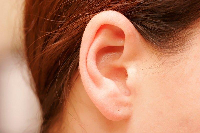 форма ушей и характер