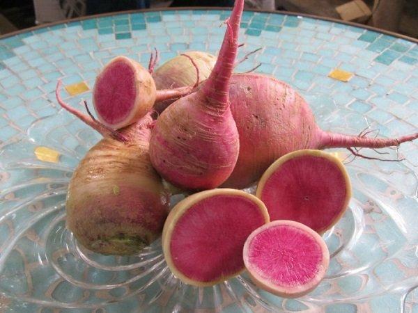 редис-арбуз