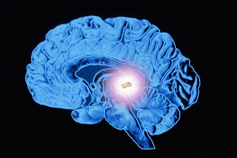 гормон сна мелатонин и психика человека