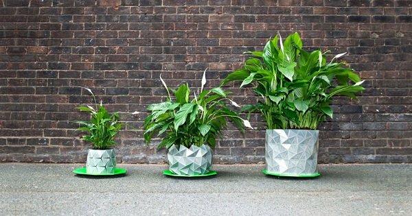 Отличная новость для любителей комнатных растений: горшки, которые сами увеличиваются.