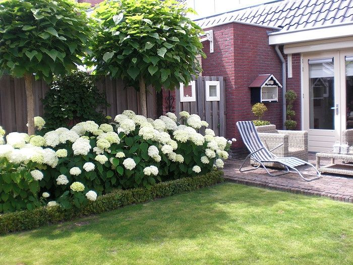 гортензия садовая в ландшафте