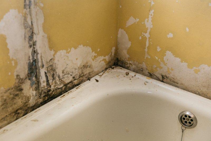 Грибок и плесень атакуют! Бордюр для ванной (личный опыт —8 лет).