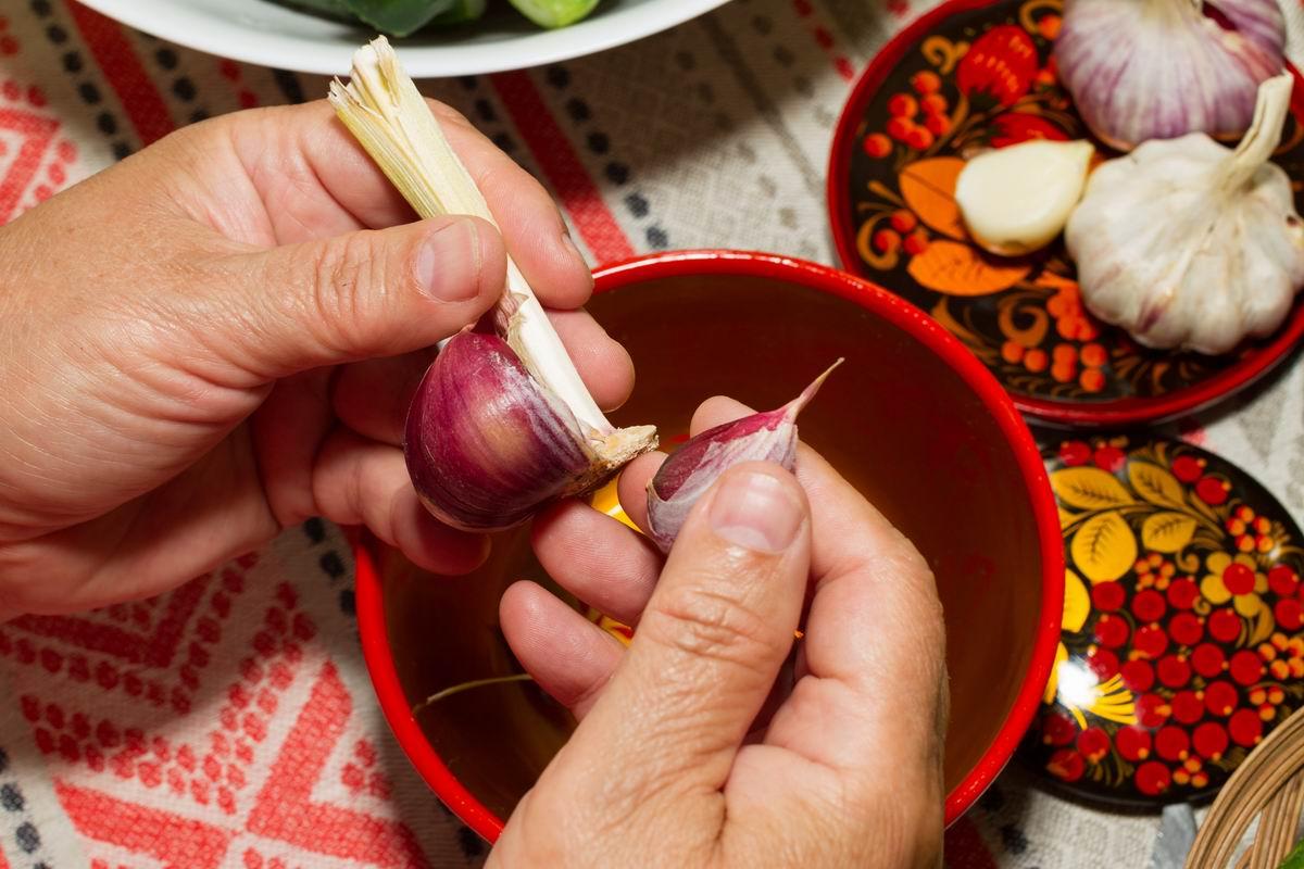 Правило садовника гласит, что под озимый чеснок грядки нужно готовить загодя