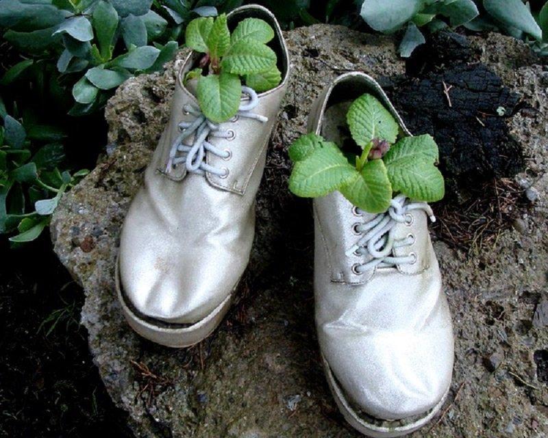 растение в ботинках