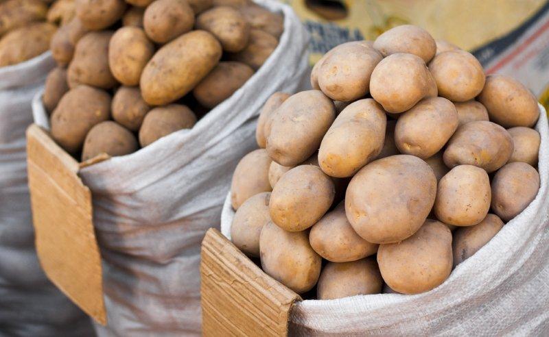 хранение картофеля зимой на даче