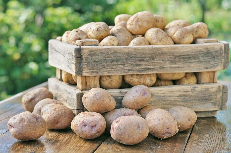 хранить картофель зимой