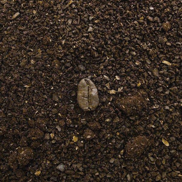 кофейное зерно на земле