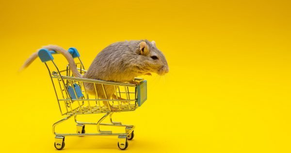 Gray rat inside the shopping cart on a yellow background