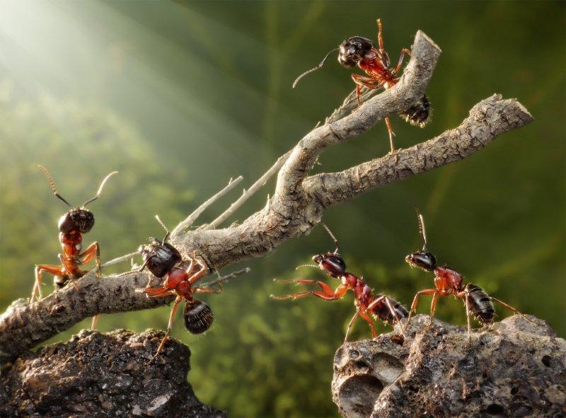 как бороться с муравьями в частном доме