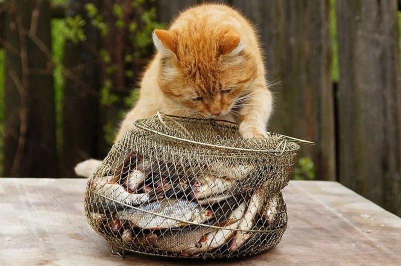 как быстро и аккуратно почистить рыбу