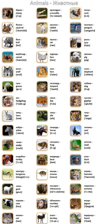 английский язык в картинках с произношением