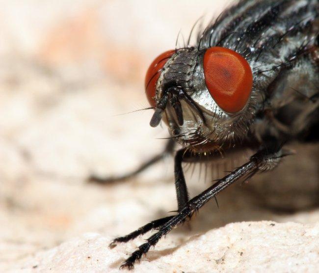масляный аэрозоль против насекомых
