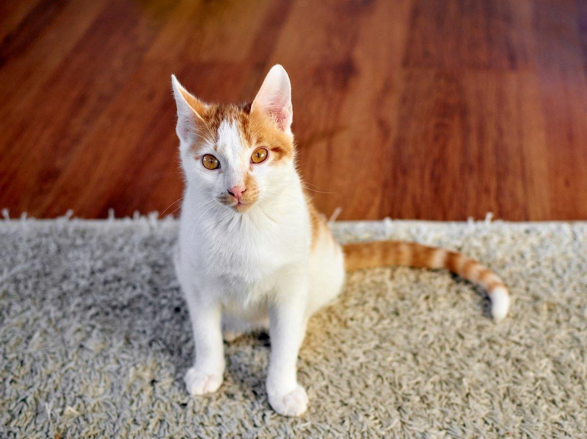 как избавиться от кошачьего запаха на диване