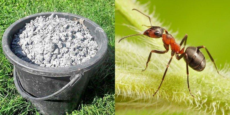 как избавиться от муравьев в саду на деревьях