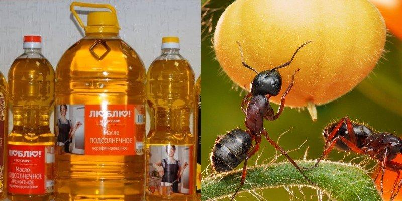 как избавится от больших муравьев